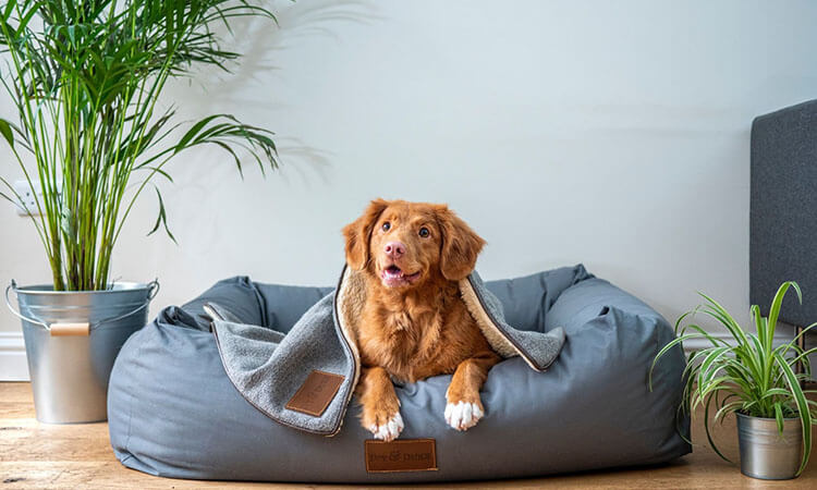 Help-Your-Dog-Adapt-Easier-to-Life-in-New-Jersey