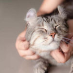 How Long Do Cats Live As Pets