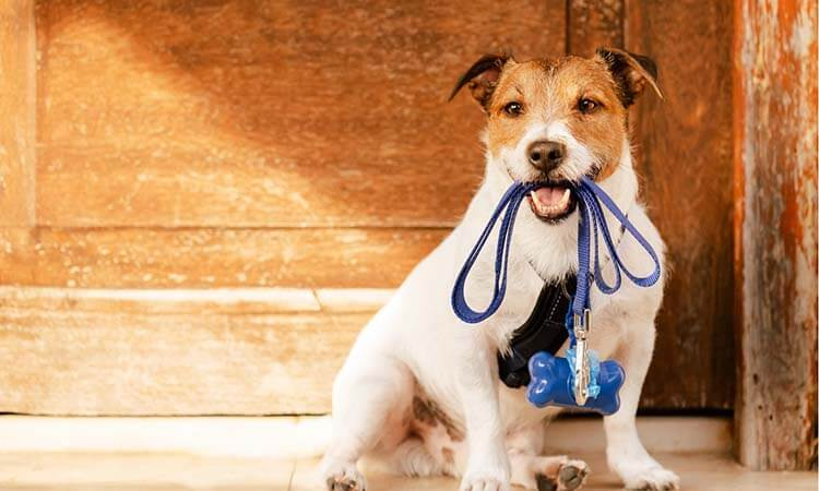 How To Attach A Dog Harness Quick And Easy Steps