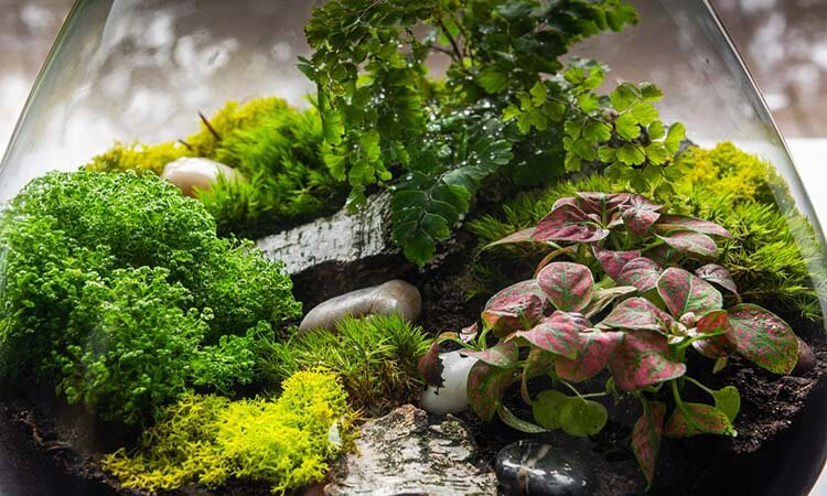 How To Build A Moss Terrarium In 6 Easy Steps