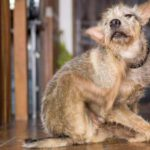 How To Get Rid Of Pet Odor In House The 5 Ways