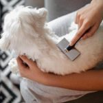 Pet Brushes For Your Fur Babies
