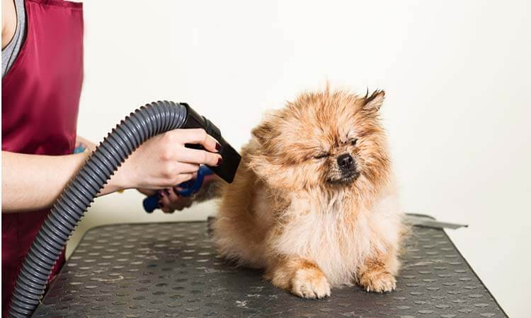 Pet Dryers For Easy Home Grooming