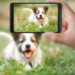 Pet Monitors To Watch Your Pets