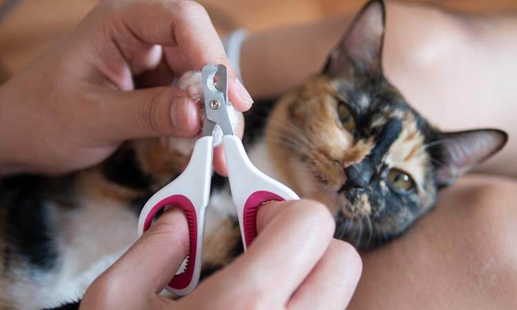 Pet Nail Clippers For Pet Grooming