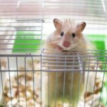 Syrian Hamster Cages For Your Tiny Pets