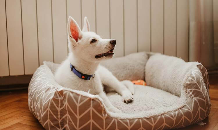 The 7 Best Calming Dog Beds