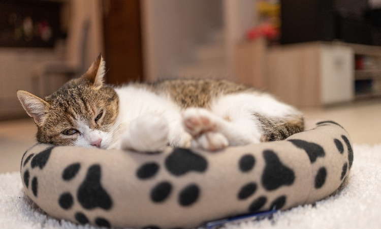 The 7 Best Cat Beds For Pet Cats