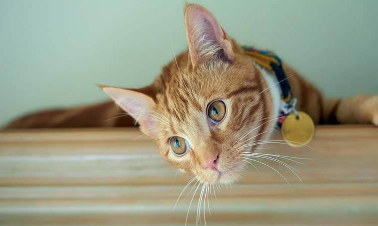 The 7 Best Cat Collars for Safety