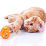The 7 Best Cat Toys For Bored Cats