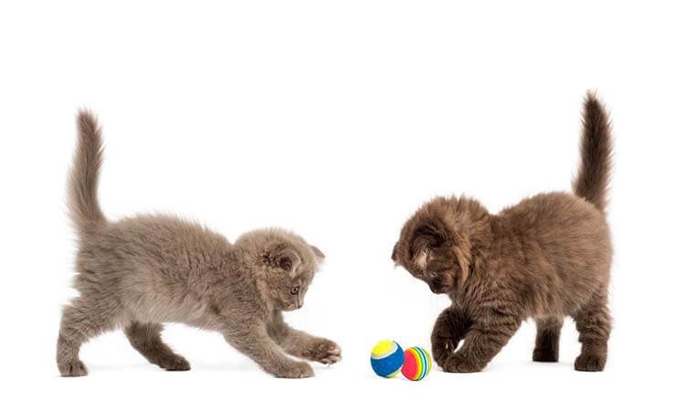 The 7 Best Cat Toys For Indoor Cats