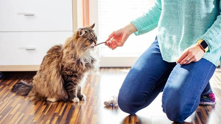 The 7 Best Cat Treats For Kittens