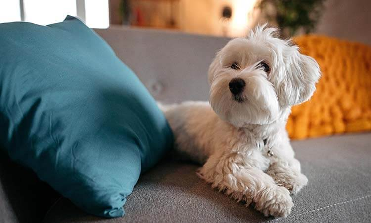 The 7 Best Couch Covers for Pets