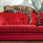 The 7 Best Couches For Pets To Relax On
