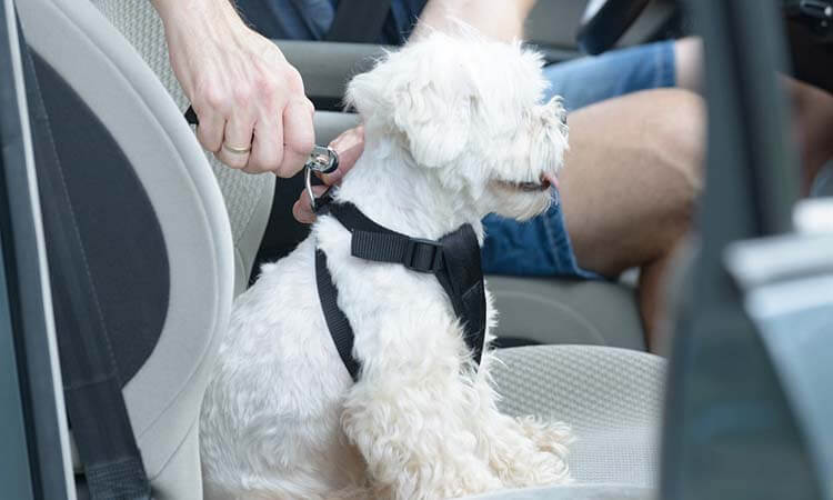 The 7 Best Dog Car Harnesses For Your Pet's Safety