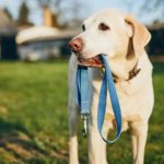 The 7 Best Dog Leashes For Your Furry Friends