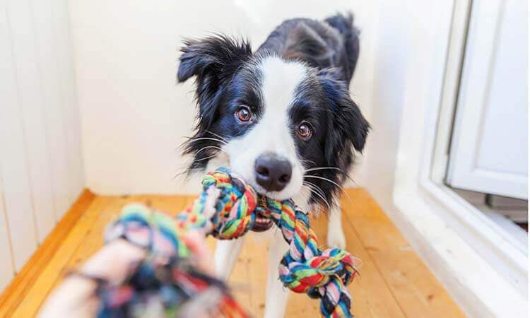 The-7-Best-Dog-Rope-Toys