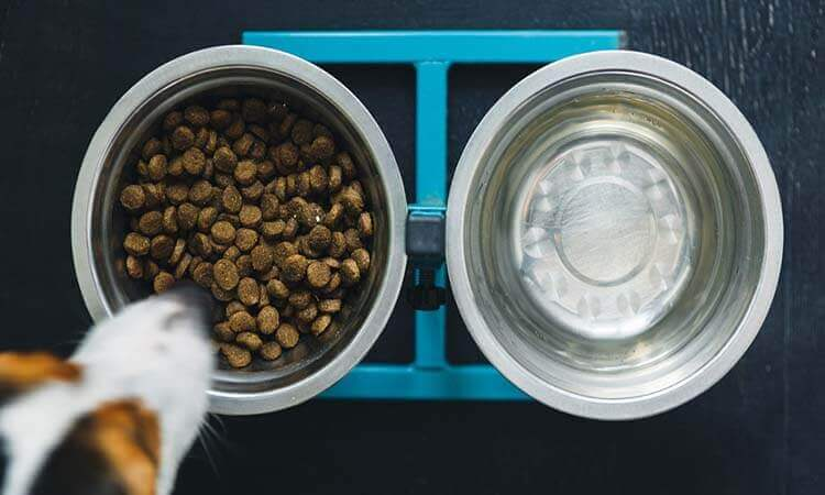 The-7-Best-Elevated-Dog-Bowls