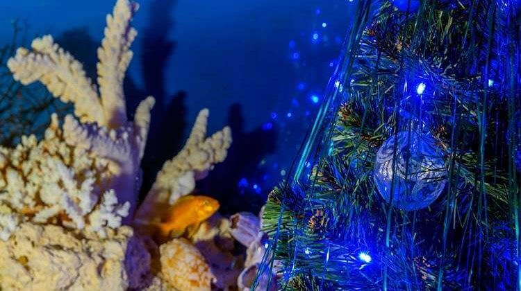 The 7 Best Fish Tank Ornaments For Your Aquarium