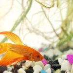 The 7 Best Food For Betta Fish