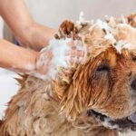 The 7 Best Pet Shampoos For Dog Grooming copy