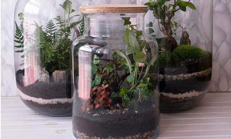 The 7 Best Plants For Closed Terrariums