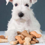 The 7 Best-Rated Dog Treats For Canine Pets