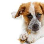 The 7 Best Rawhides For Dogs