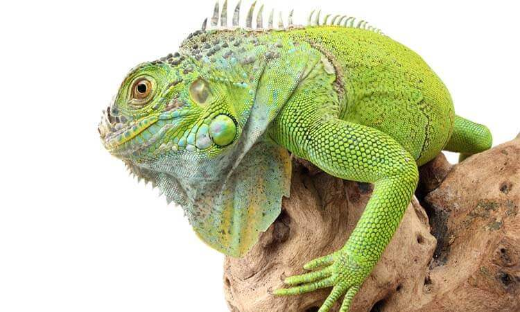The 7 Best Reptile Thermometers For Monitoring