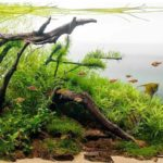 The-7-Best-Substrates-For-Freshwater-Aquariums