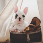 The Best Covered Dog Beds For Man's Best Friend