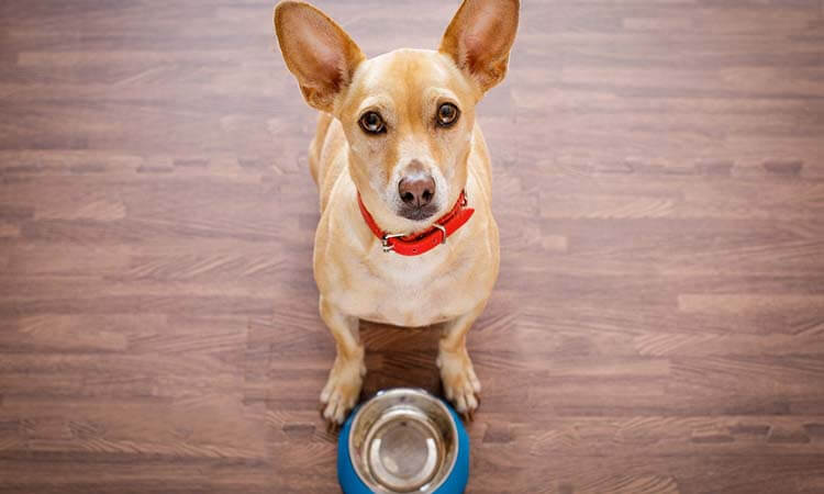Wet Dog Food For Chihuahuas